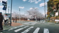 WS, Time lapse, Cherry blossoms near the Yamazaki river, people walking by a road crossing