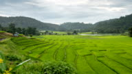 Time lapse: clouds move over the rice field that plant in the mountain area