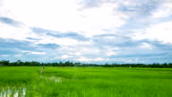 Time lapse: clouds move over the rice field