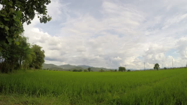 Time lapse, Landscape of green rice field with cloud in Thailand