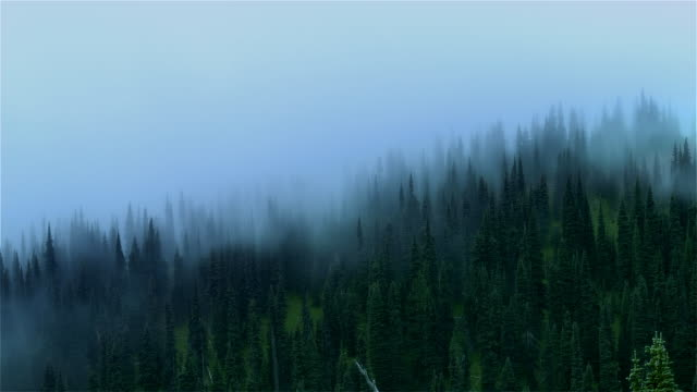 Time lapse mist rolling over treetops