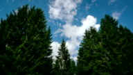 Time lapse of a forest and sky