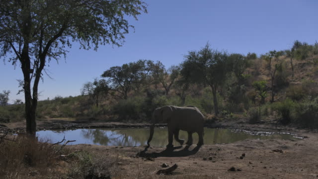 Time lapse of baboons and elephants and kudo coming to drink water at a waterhole in South Africa