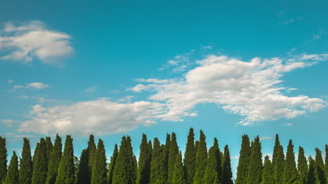 Time Lapse of Beautiful Clouds Moving Over Pine Trees