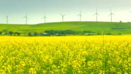 Time lapse of canola field and windmills