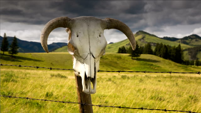 Time lapse of cattle skull and storm clouds western concept