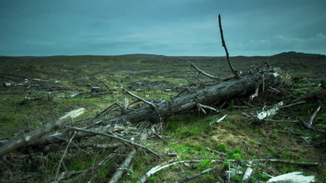 Time Lapse of Deforested Land