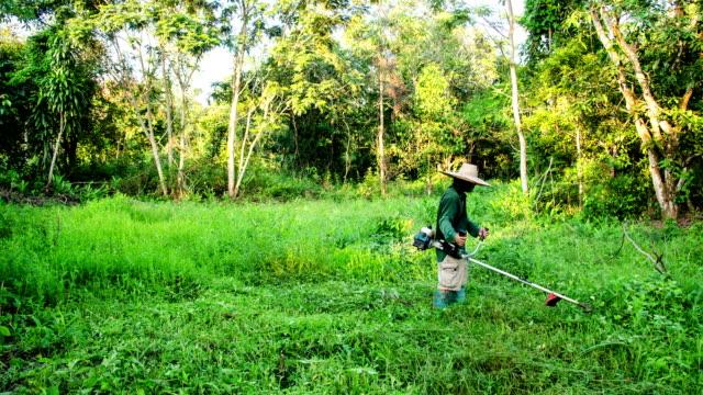 Zeitraffer des Menschen grüne Rasenmähen im Hinterhof