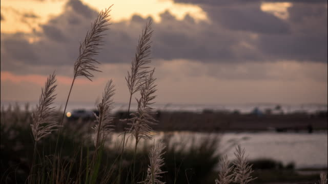 Time lapse of Reeds with lake and sea view