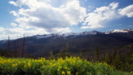time lapse of wildflowers, moountains and clouds in Rocky Mountain national park