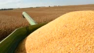 Time Lapse shot of a John Deere Combine Harvester harvesting corn on a farm in Illinois Camera is mounted above the corn seed basin as it piles up...