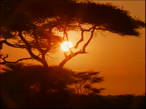time lapse sunrise behind silhouetted trees / Africa?