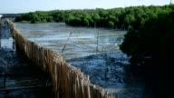 Zeitraffer: die Wände aus Bambus verringern die Küstenerosion.