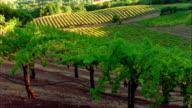 Time lapse wide shot sun moving across terraced vineyard/ Charlotteville, North Carolina