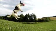 HD SUPER SLOW-MO: Time Warp Shot Of An Acrobatic Dog