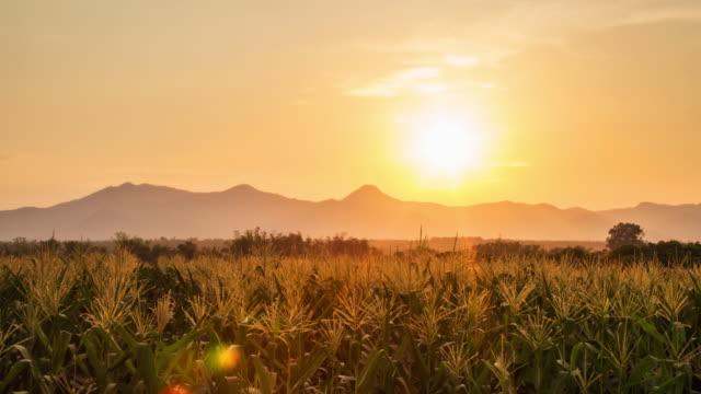 4 K Time-lapse: majs fältet och dag till solnedgång