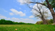 Time-lapse: Green Lawns and Tree in Public Park