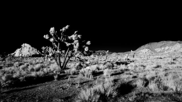 Timelapse Joshua Tree desert sunrise infrared