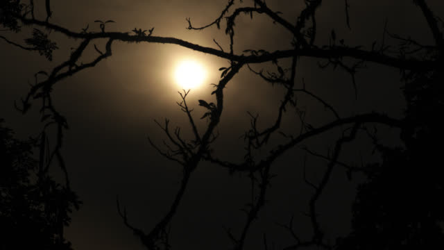 Timelapse moon rises through cloudy sky over rainforest, Megatha, Myanmar