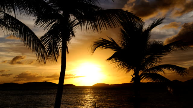 Time-lapse of a Caribbean Sunset with Palm Trees