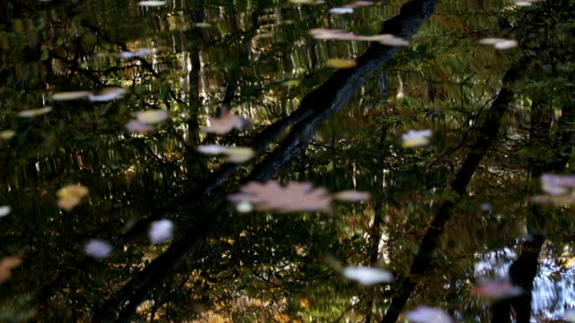 Timelapse of Autumn Leafs Rotating on Pond