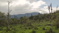 Time-lapse of clouds moving over a pasture in montane rainforest with the Andes in the background