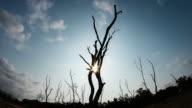 Timelapse of dead trees