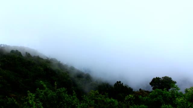 Timelapse von Nebel