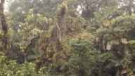 Time-lapse of mist blowing through tropical rainforest
