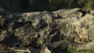 Time-lapse of old fallen, rotting tree, slider left.