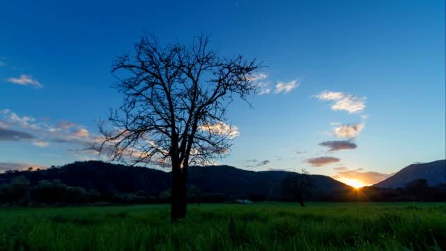4K Timelapse of Pear Tree under Cloudy Sky