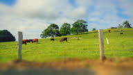 Timelapse of rural scene with cows, in the hinterland of Byron Bay region, New South Wales, Australia