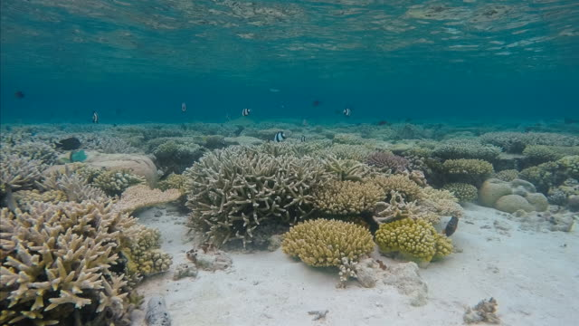 Timelapse on exotic coral reef