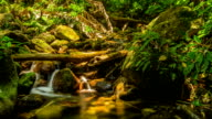 timelapse panning: tiny waterfall in summer