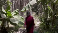 Timelapse people on plantation path during date harvest, Oman