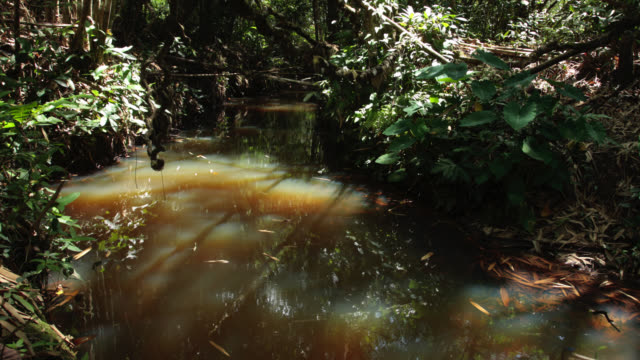 Timelapse shadows shift over rainforest floor and stream, Megatha, Myanmar