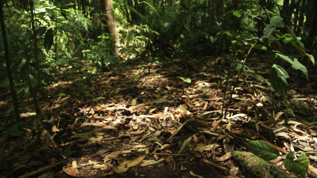 Timelapse shadows shift over rainforest floor, Megatha, Myanmar