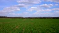 Timelapse springtime wheat field