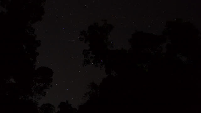 Timelapse stars drift through night sky over rainforest, Gwa, Myanmar