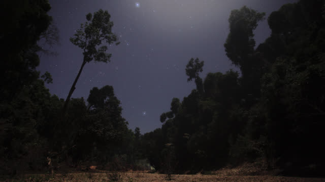 Timelapse stars drift through night sky over rainforest trees, Gwa, Myanmar
