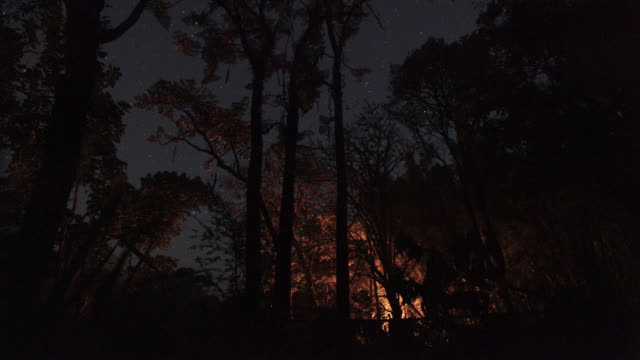 Timelapse stars shift and moon rises over rainforest camp, Megatha, Myanmar