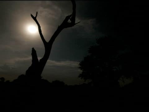 Timelapse Storm on moonlit night, lightning behind dead tree, Kalahari, South Africa