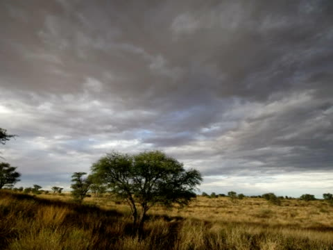 Timelapse stormy clouds away from camera over grassy desert, then pan across; nice light at end of shot, Kalahari, South Africa