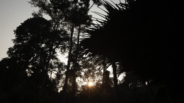 Timelapse sun rises over rainforest, Htamanthi, Myanmar
