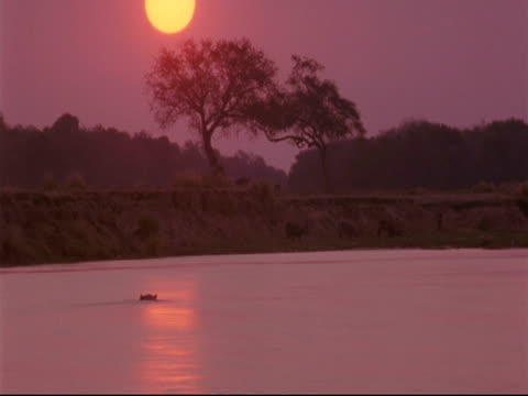 Timelapse - sun setting over river, hippo in water, animals drinking at waters edge, Mana Pools, Zimbabwe