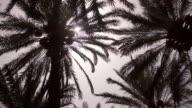 Timelapse sun tracks over date palms in plantation, Oman