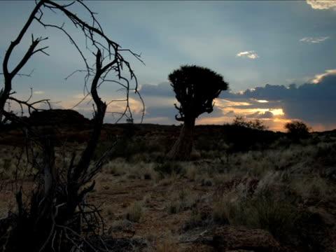 Timelapse sunset and tree and desert, Augrabies Falls National Park, Kalahari, South Africa