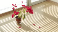 Timelapse Video of a Flowerpot and Sunshine in Home