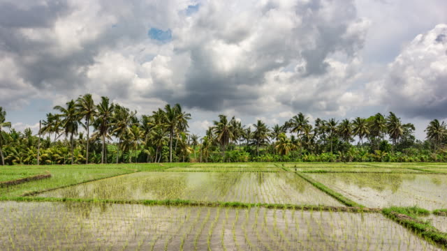 Timelapse video with beautiful intense moving clouds reflected into the surface of rice farm fields in rural tropical Bali, Indonesia in supreme quality (4K/UHD to HD) - Stock Video