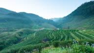 4K Time-lapse:Tea plantations